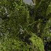 Unityで木が風になびく機能を追加する